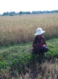 Tra's neighbor taking a break on the farm as we try cutting the rice